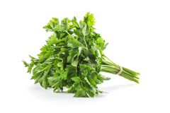 Bunch of fresh green parsley. On white background Royalty Free Stock Images