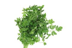 Bunch of fresh green parsley. Royalty Free Stock Images