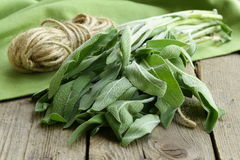 Bunch of fresh green sage Royalty Free Stock Photo