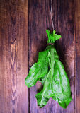 Bunch of fresh green sorrel. Hanging on a wooden brown wall Royalty Free Stock Photo