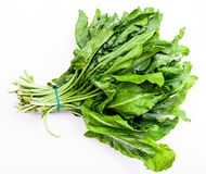 Bunch of fresh green sorrel leaves on white. Background Stock Photography