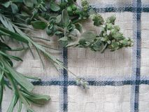 A bunch of fresh greens on a kitchen towel. Bouquet of spicy herbs, composed of rosemary, oregano, lavender. Autumn harvest from aromatic and medicinal herbs royalty free stock image
