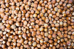 Hazelnuts forming a background Stock Image