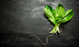 Bunch of fresh herbs . On the black wooden table Stock Photography