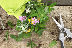 Bunch of fresh herbs and garden scissor. On wooden background Stock Photography