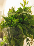 Bunch of fresh herbs from garden in transparent vase Stock Photos