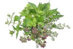 Bunch fresh herbs mint, thyme, lemon balm Stock Photography