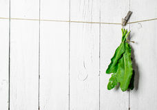 Bunch of fresh herbs on a string. On white wooden wall Stock Photo