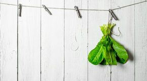 Bunch of fresh herbs on a string. On white wooden wall Royalty Free Stock Photography