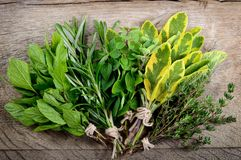 Bunch of fresh herbs wooden background. Stock Photography