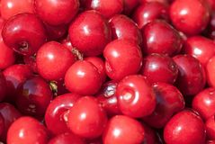 Bunch of fresh, juicy cherries Royalty Free Stock Photography
