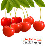 Bunch of fresh, juicy, ripe cherries. Stock Photos