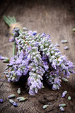 Bunch of fresh lavender Stock Images