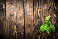 Bunch of fresh leaves hanging on a string. On wooden background Royalty Free Stock Photos