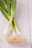 Bunch of fresh leeks or scallions. Overhead view of a bunch of fresh leafy leeks or scallions lying on white painted wooden boards Stock Image