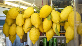 A bunch of fresh lemons on Capri Island in Italy. A bunch of fresh lemons on Capri Island, Italy Royalty Free Stock Photos