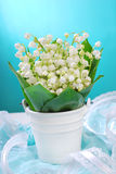 Bunch of fresh lily of the valley Royalty Free Stock Images