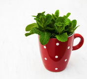 Bunch of fresh mint. In a cup  on a white wooden background Royalty Free Stock Photography