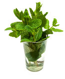 Bunch of fresh mint. In a glass of water on a white background Stock Photography