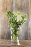 Bunch of fresh mint in a glass of water Stock Photos