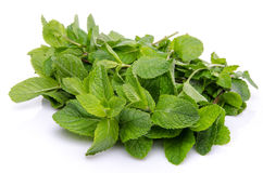 Bunch of fresh mint Stock Photography