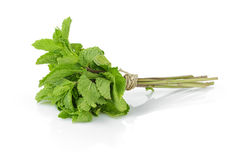 Bunch of fresh mint. Isolated on white background royalty free stock photos