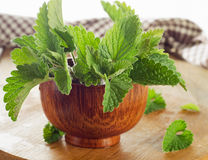 Bunch of Fresh mint leaves on a old  wooden table. Royalty Free Stock Image