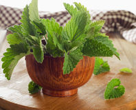 Bunch of Fresh mint leaves on a  wooden table. Royalty Free Stock Photo