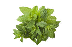 Bunch of fresh mint Royalty Free Stock Photo