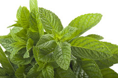 Bunch of fresh mint Stock Images
