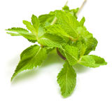 Bunch of fresh mint  on white background Stock Photo