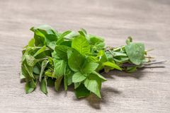 A bunch of fresh mint Royalty Free Stock Photo