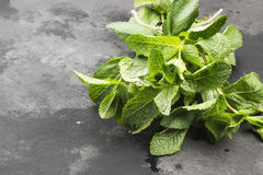 Bunch fresh mints on a dark background. Copy space Royalty Free Stock Photos