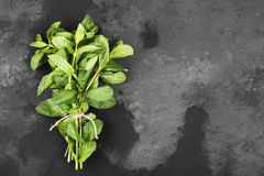 Bunch fresh mints on a dark background. Top view, copy space Stock Image