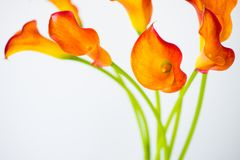 Bunch of fresh orange Calla lilly flowers. With copy space stock photo
