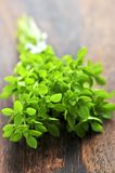 Bunch of fresh oregano Royalty Free Stock Images