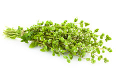 Bunch of fresh Oregano herb /  Majoram  /   Royalty Free Stock Photo