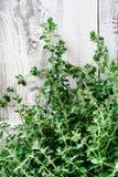 Bunch of fresh oregano Royalty Free Stock Images