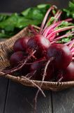 Bunch of fresh organic beets on rustic wooden table. Selective focus Royalty Free Stock Photo