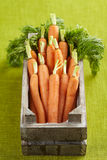 Bunch of fresh organic carrots in wooden crate Royalty Free Stock Photography