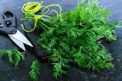A bunch of fresh organic dill on a black vintage rustic background, tied with green twine Royalty Free Stock Images