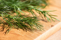 Bunch of fresh organic dill on a rustic wooden background with d Royalty Free Stock Images