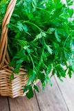 Bunch of fresh organic parsley from garden in a wicker basket, on plank wood table, rustic style Royalty Free Stock Images