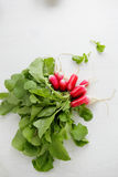 Bunch fresh organic radish. On white Royalty Free Stock Images