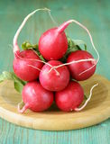 Bunch of fresh organic radishes Royalty Free Stock Photography