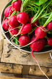 Bunch of fresh organic red radish with water drops in aluminum bowl on weathered wood garden box, clean eating, healthy diet. Vegetarian, authentic style Stock Photos