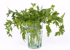 Bunch of fresh parsley Royalty Free Stock Photography
