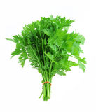 Bunch of fresh parsley isolated Stock Image