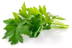 Bunch fresh parsley Stock Photos