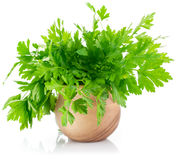 Bunch fresh parsley Stock Images